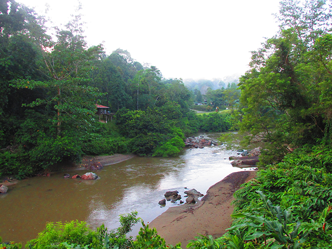 A view looking across the Segama River back towards the Danum Valley Field Station - Photo: © Henry Grub